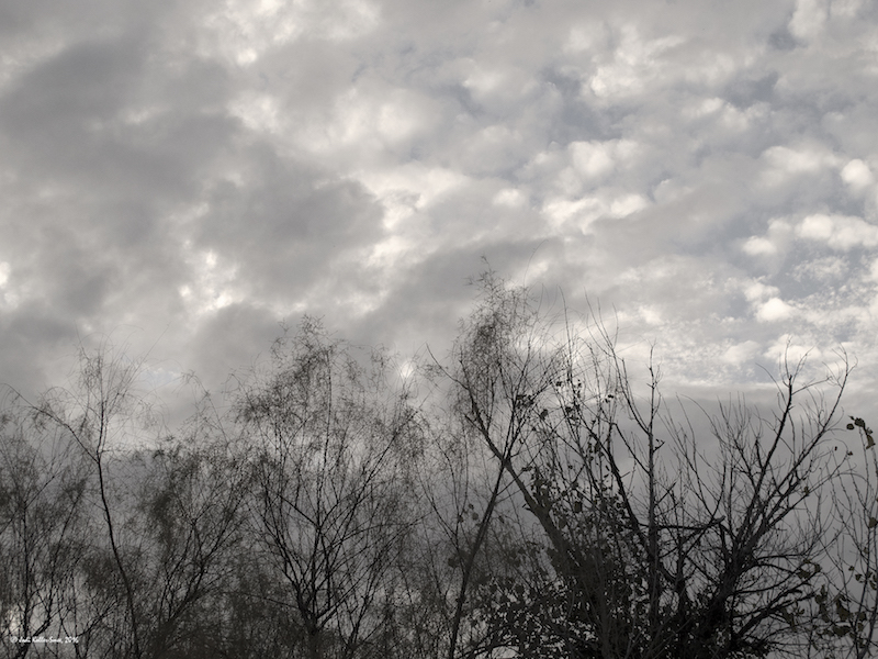 clouds-scraggly-trees-2971-copyright-small
